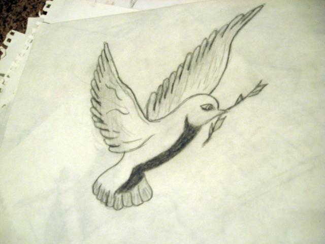 dove-sketch