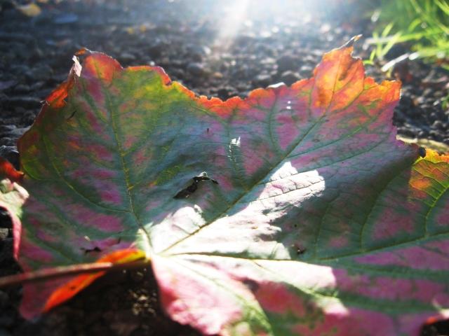 Fallen leaf Make Something Mondays