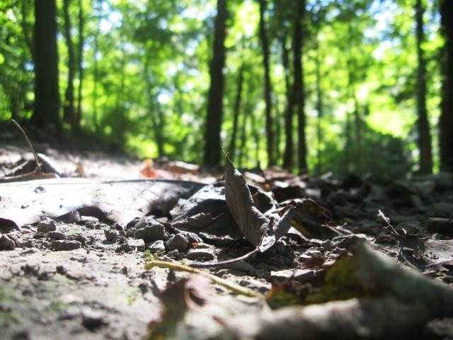 leaves on the ground  Make Something Mondays