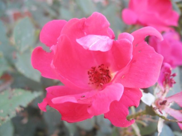 pink flower Make Something Mondays