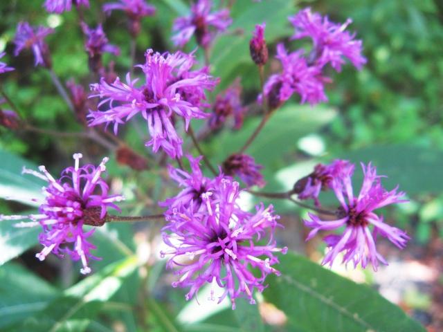 purple flowers Make Something Mondays