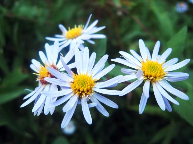 white flowers Make Something Mondays