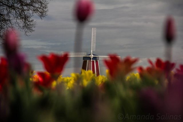 A windmill in the flowers