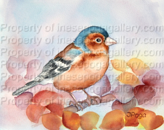 Chaffinch 2: watercolor painting