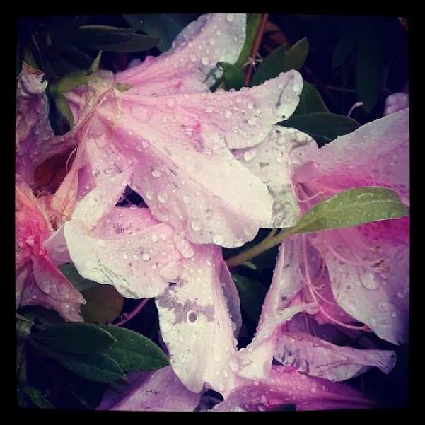 rain drops on flowers #onething