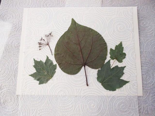 leaf base