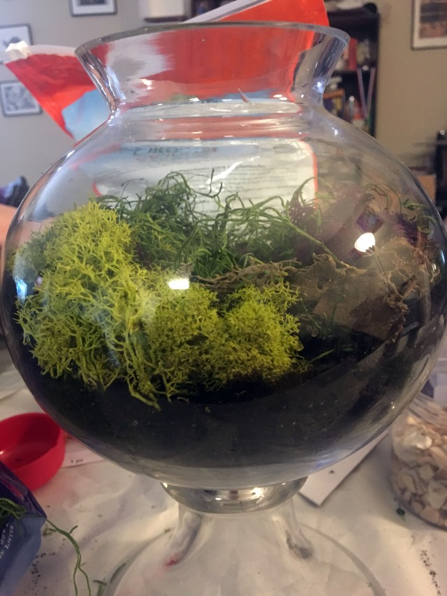 add moss to the terrarium